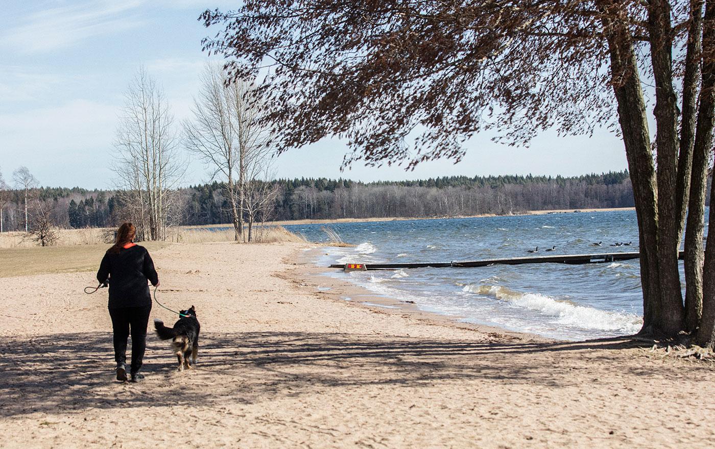 Hund och hundägare på en strand