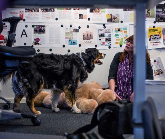 Hundar på Härliga hund